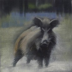 'Boar 4' oil on linen 15x15cm SOLD