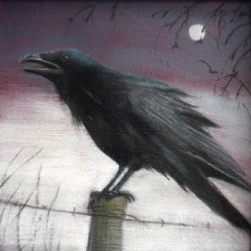 'Crow' oil on board 12.5x12.5cm SOLD