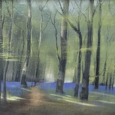Beech Woods in Spring oil on board 13 x 30cm SOLD